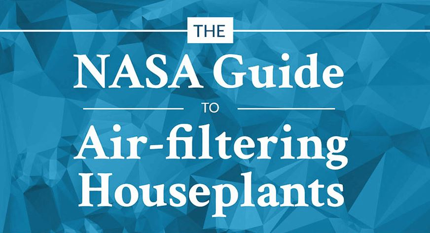 Best air cleaning plants for your home revealed by nasa for Best air filtering houseplants